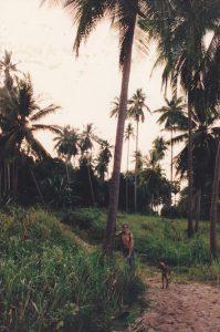 pomi tailandia
